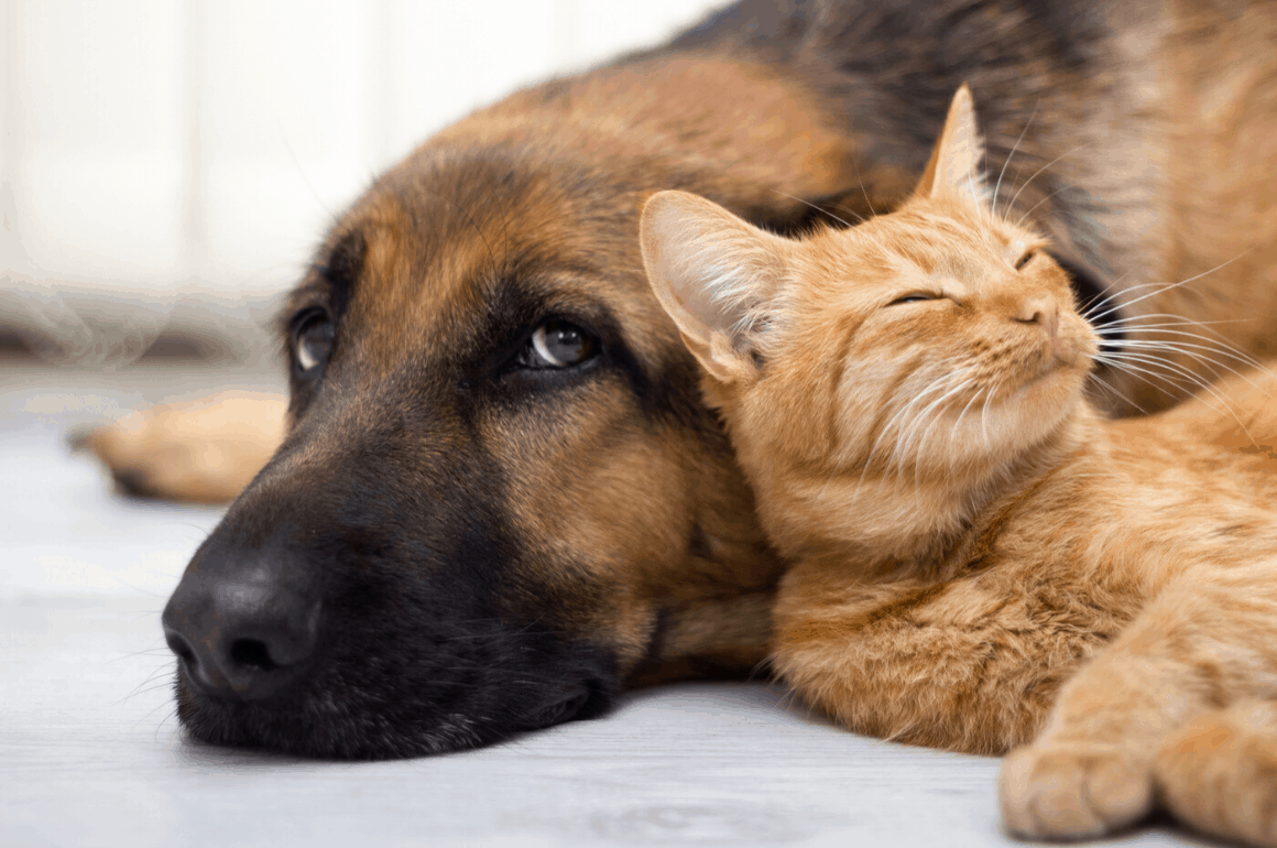 Best Air Purifiers for Pets in 2020: Detailed Reviews and Buyer's Guide