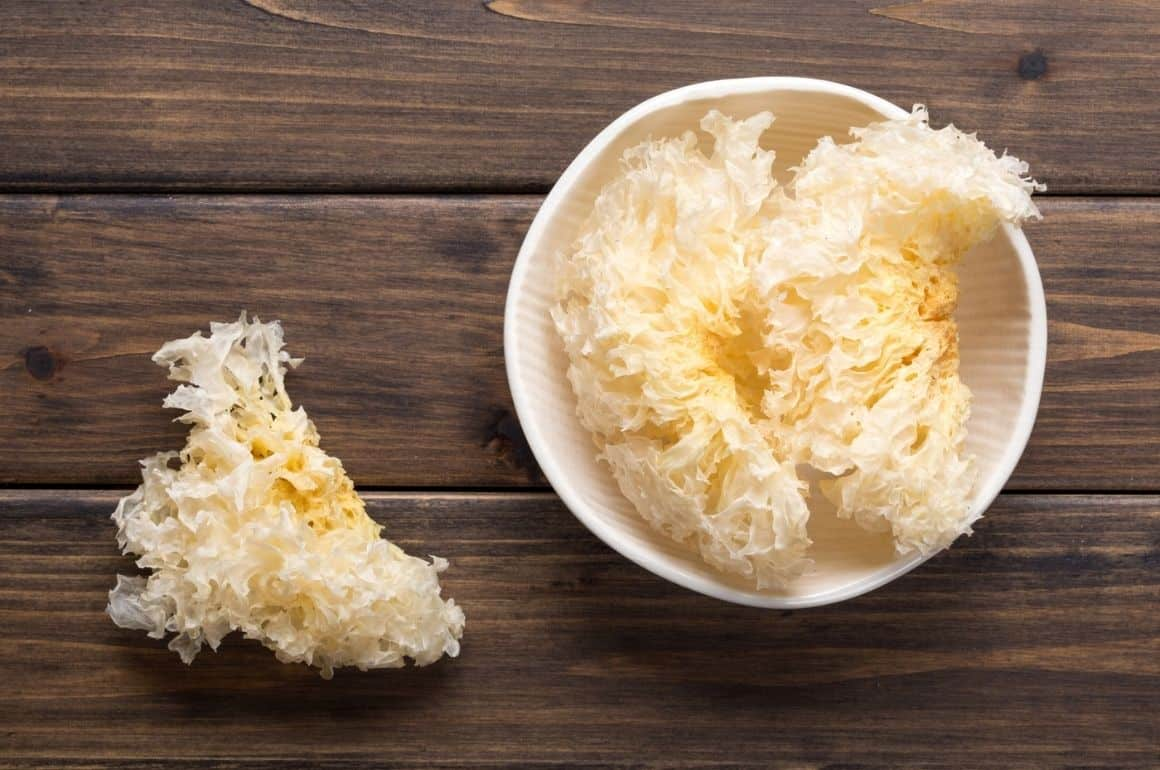 Tremella Mushroom: Benefits and Usage Guide